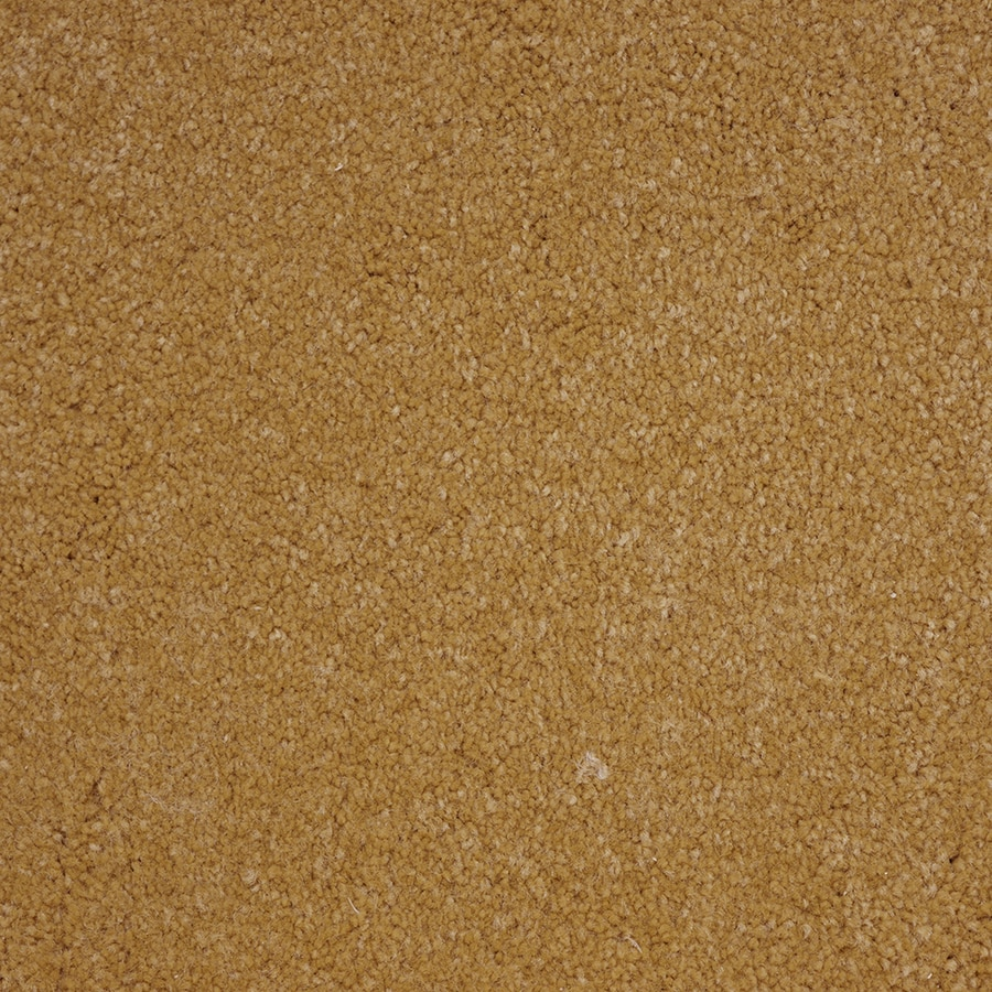 STAINMASTER Purebred PetProtect Steward Plush Carpet Sample