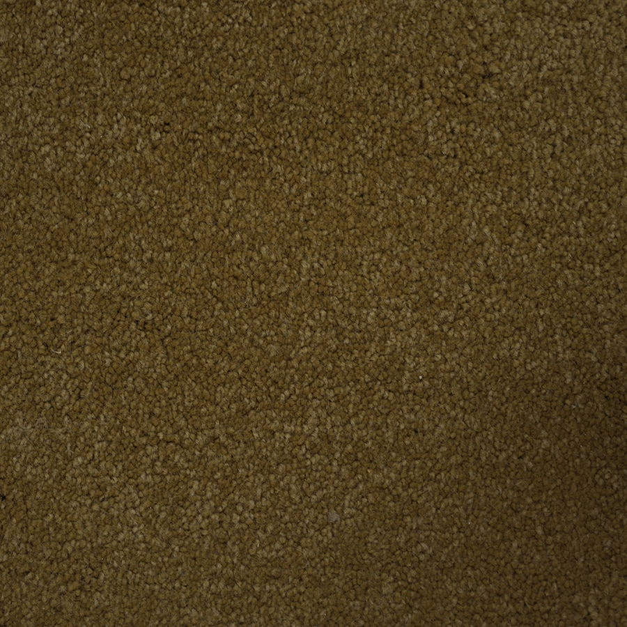 STAINMASTER Purebred PetProtect Points Plush Carpet Sample