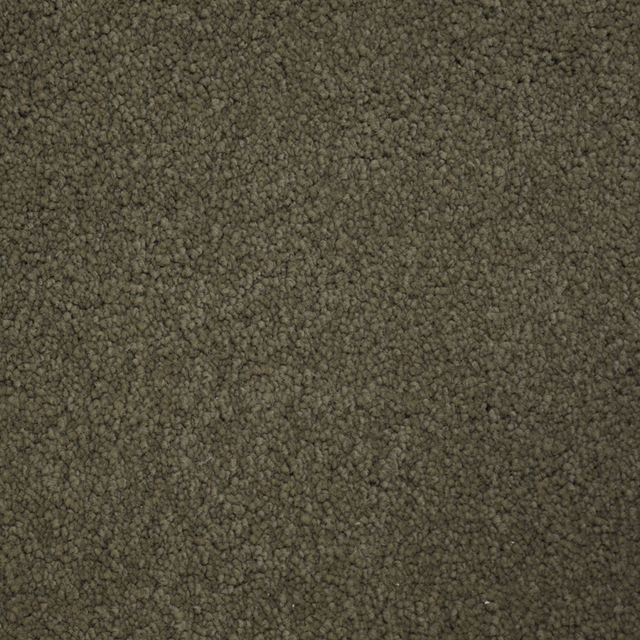 STAINMASTER PetProtect Purebred Champion Carpet Sample