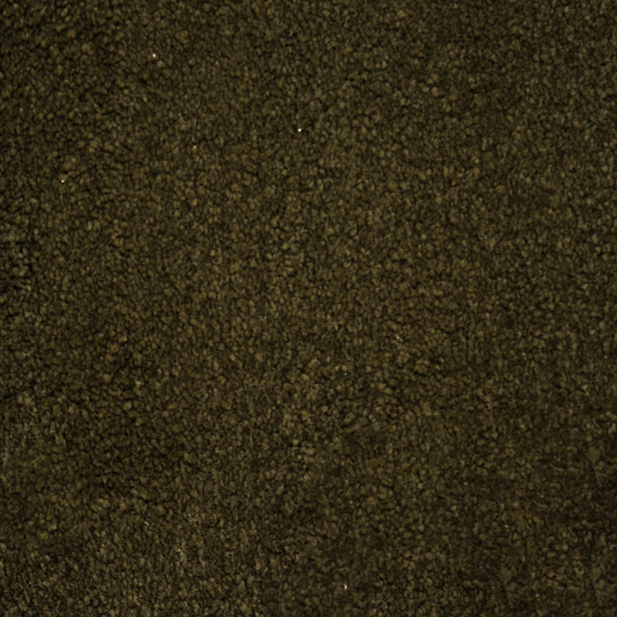 STAINMASTER Purebred Petprotect Handler Plus Carpet Sample
