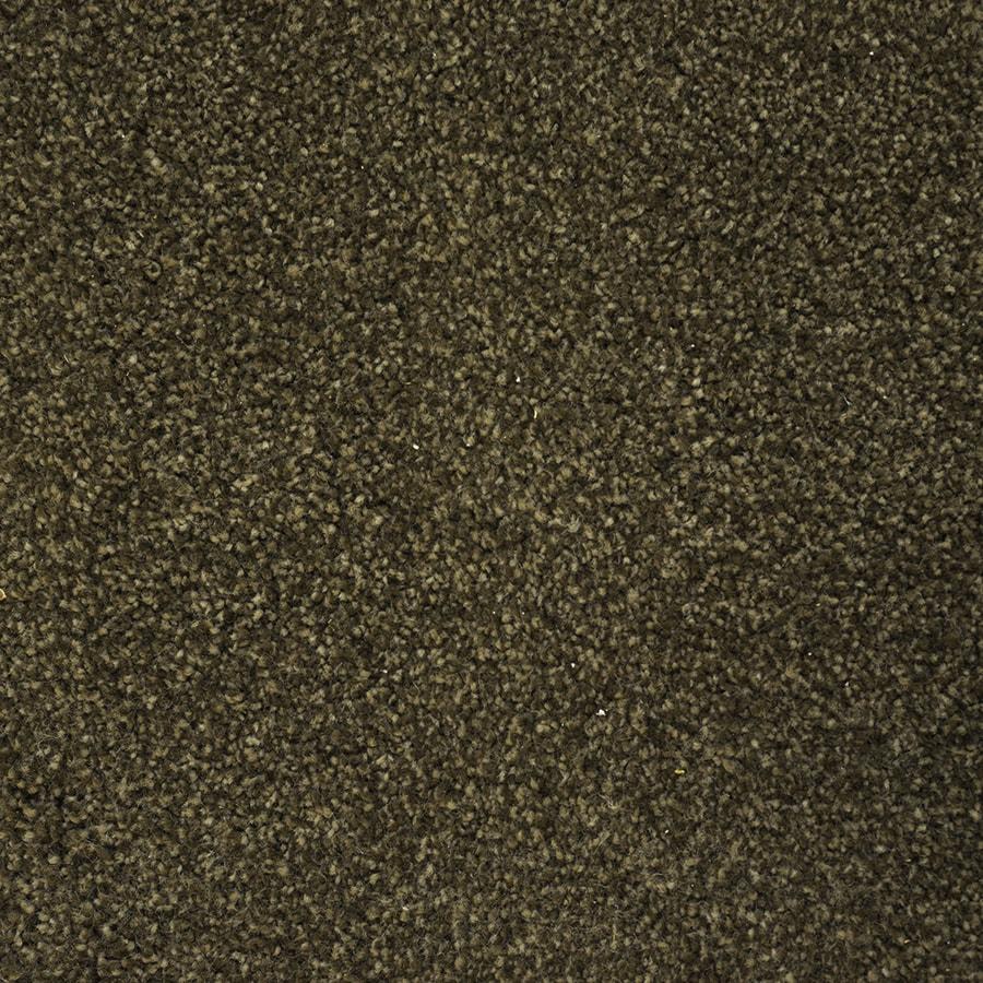 STAINMASTER PetProtect Purebred Brown Carpet Sample