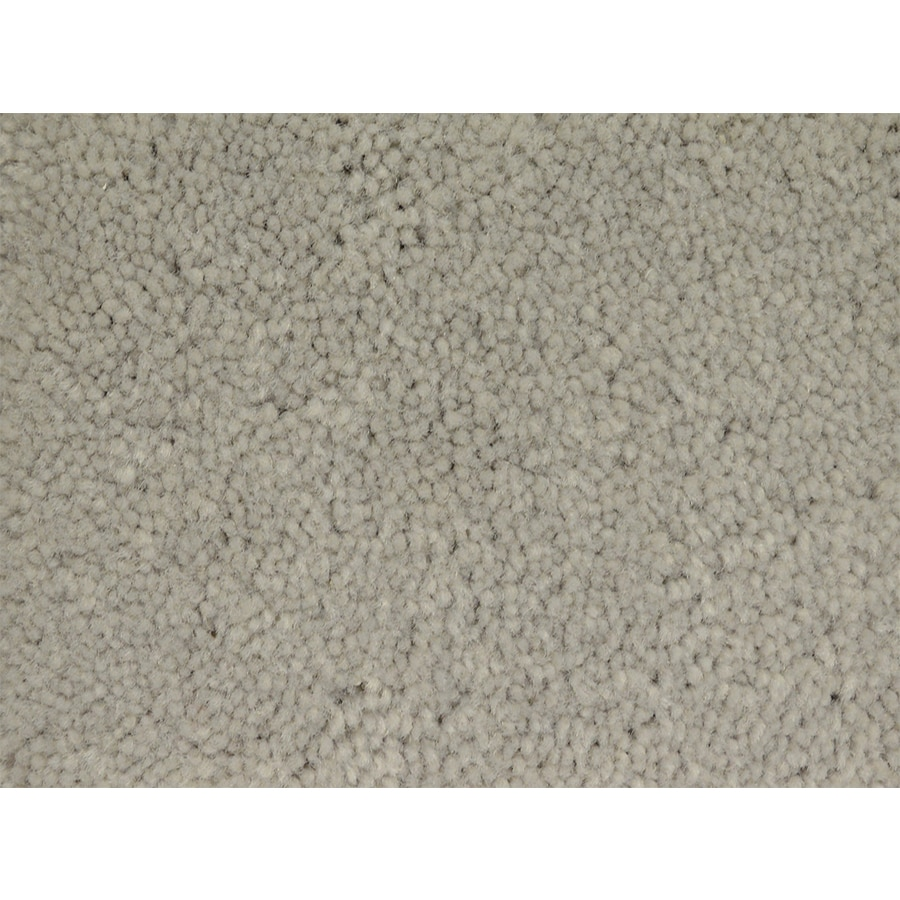 STAINMASTER Pedigree PetProtect Class Plush Carpet Sample