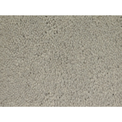 Stainmaster Petprotect Best In Show Cl Carpet Sample At