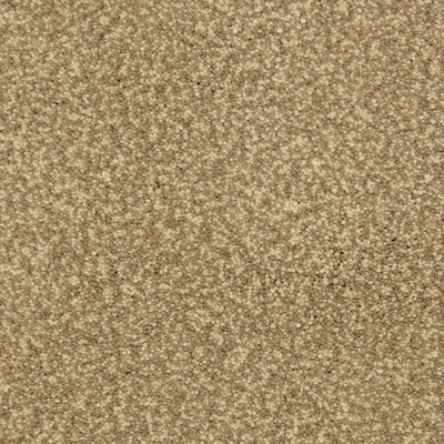 Stainmaster Petprotect Entranced Sandbar Carpet Sample At