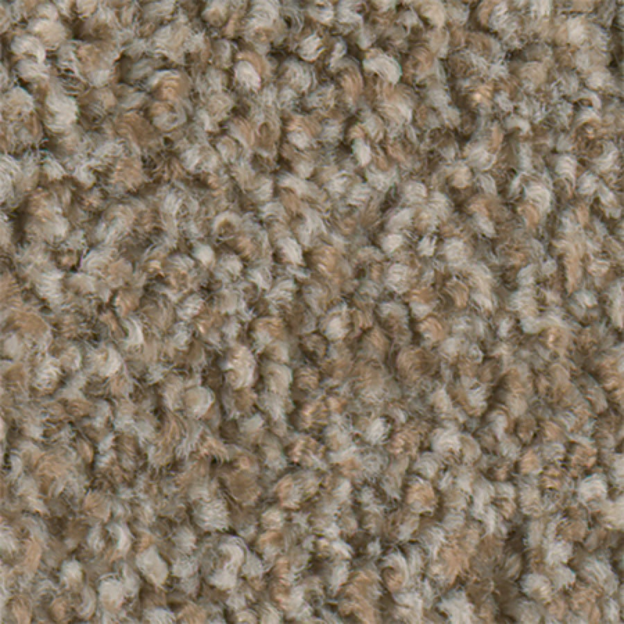 STAINMASTER Active Family Water Taxi I Pecan Sandie Carpet Sample