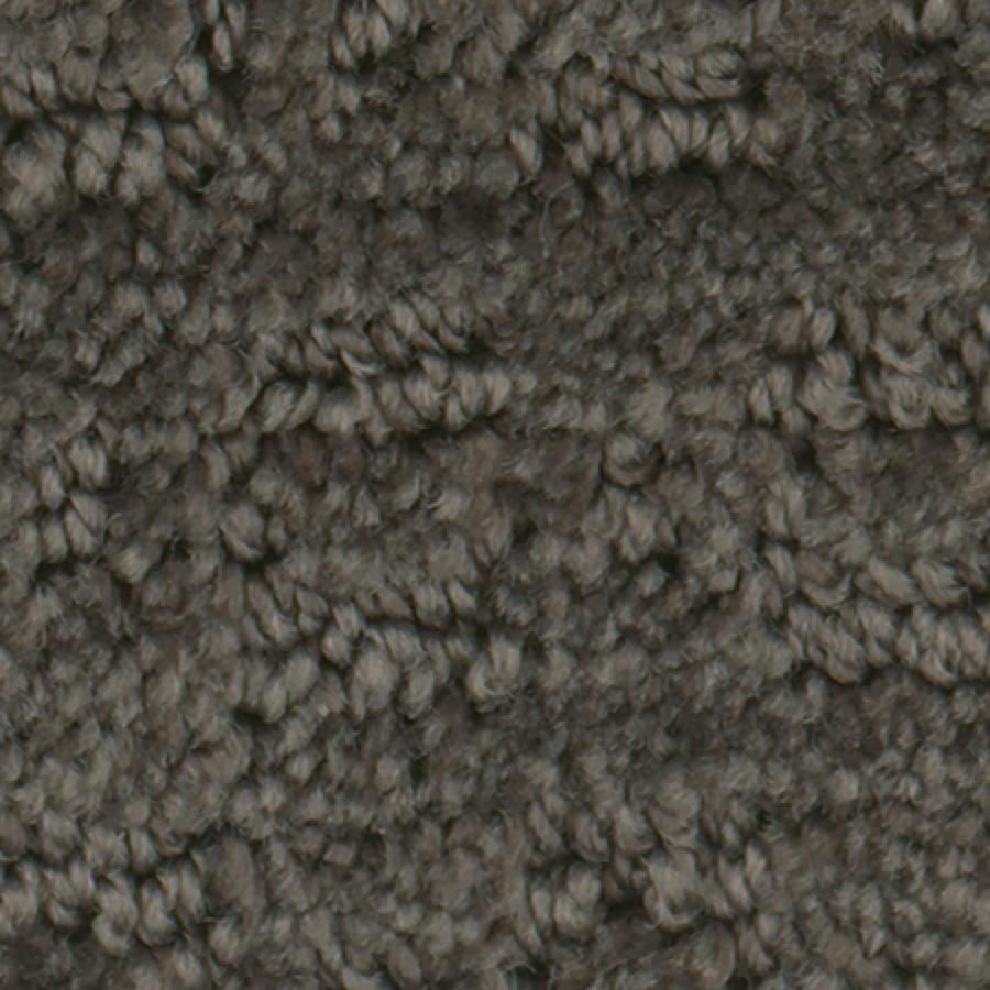 STAINMASTER Active Family Splash Town Espresso Carpet Sample
