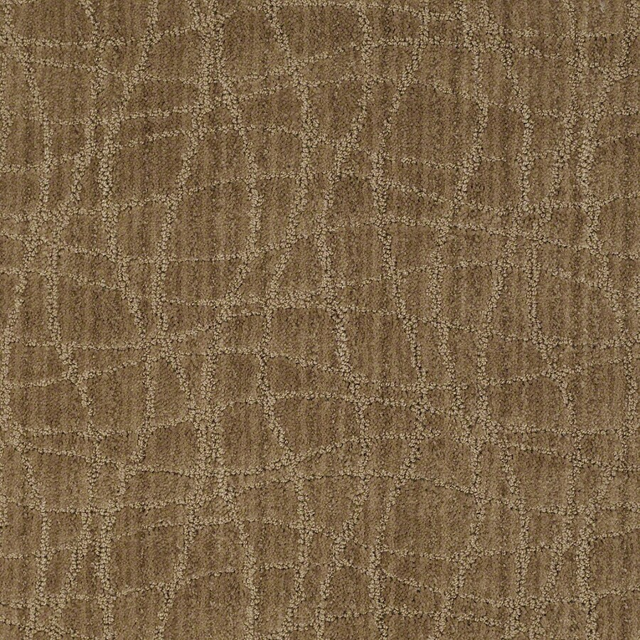 STAINMASTER Active Family Holly Springs Starfish Carpet Sample