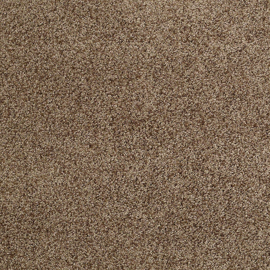 STAINMASTER TruSoft Advanced Beauty II Leather Strap Carpet Sample