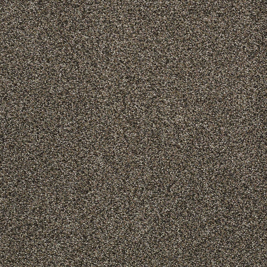 STAINMASTER PetProtect Bark to the Future II Derby Carpet Sample