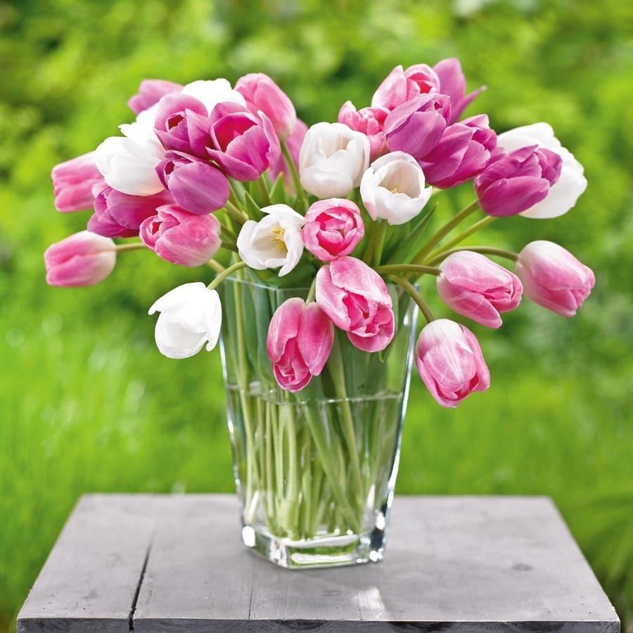 12-Pack Appleblossom Blend Tulips