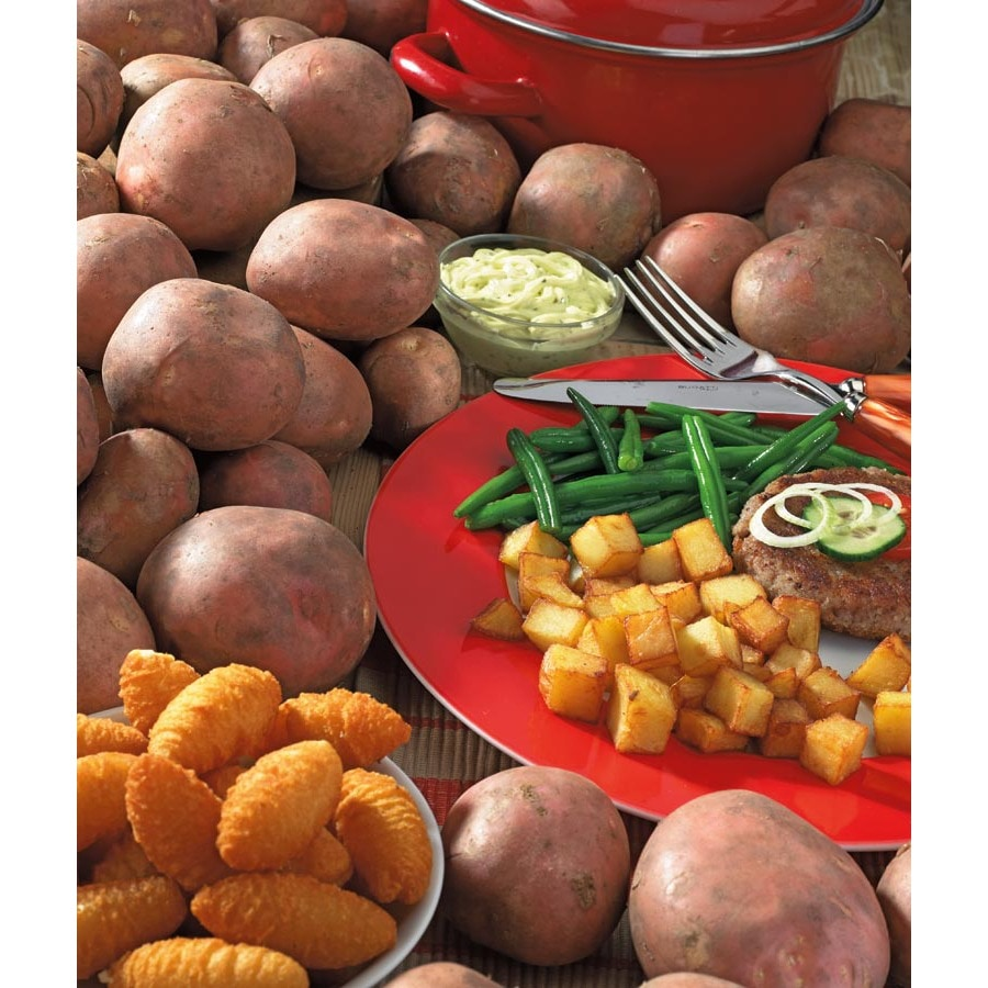1 lb Pontiac Red Potato Plant (LB22195)