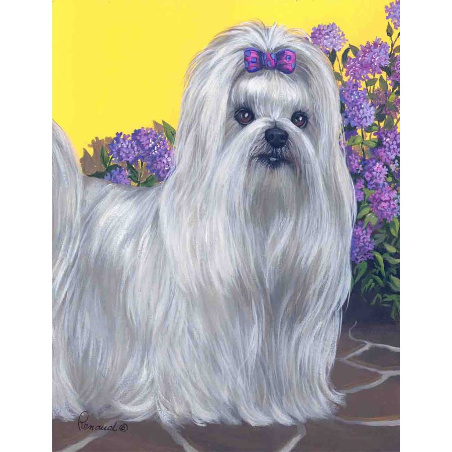 Precious Pet Paintings 1.5-ft x 1.04-ft Maltese Spring Flag