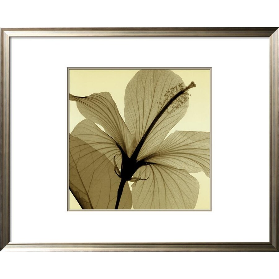 art.com 36-in W x 29-in H Framed Floral and Botanical Wall Art