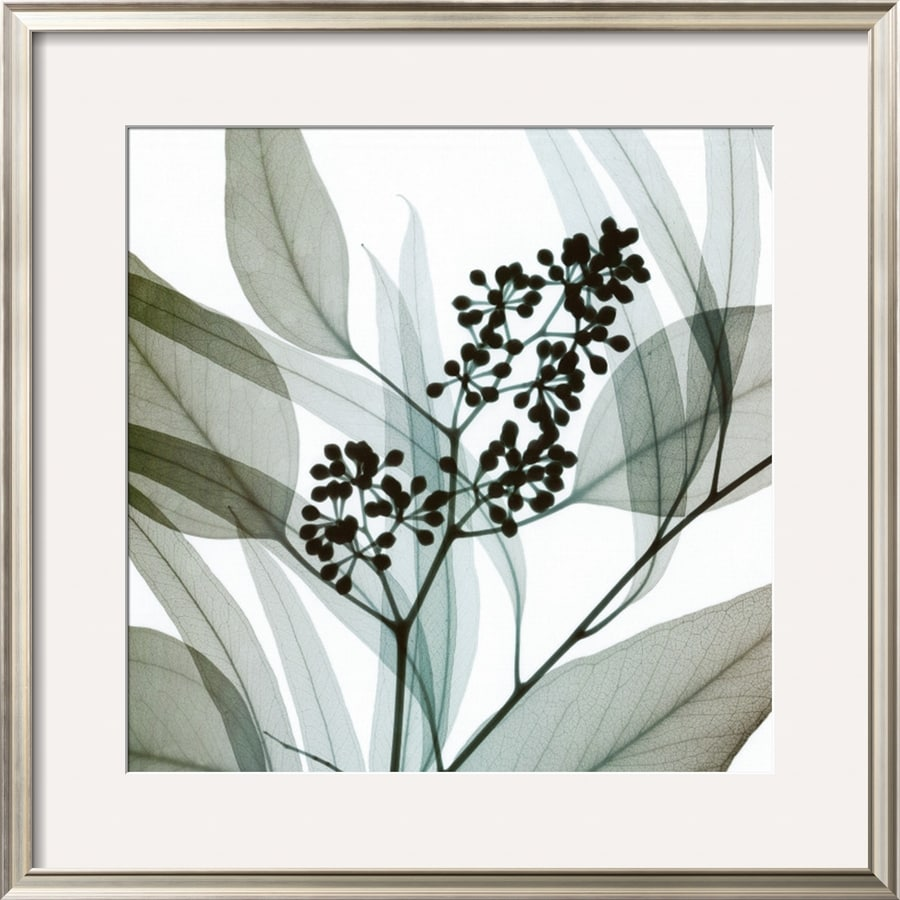 art.com 27.5-in W x 27.5-in H Framed Floral and Botanical Wall Art