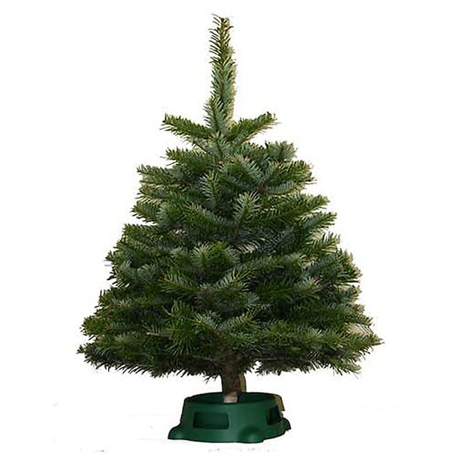 Fresh Christmas Trees At Lowes Com Our seasonal collection fits any celebration you're toasting and any festive holiday celebration! lowe s