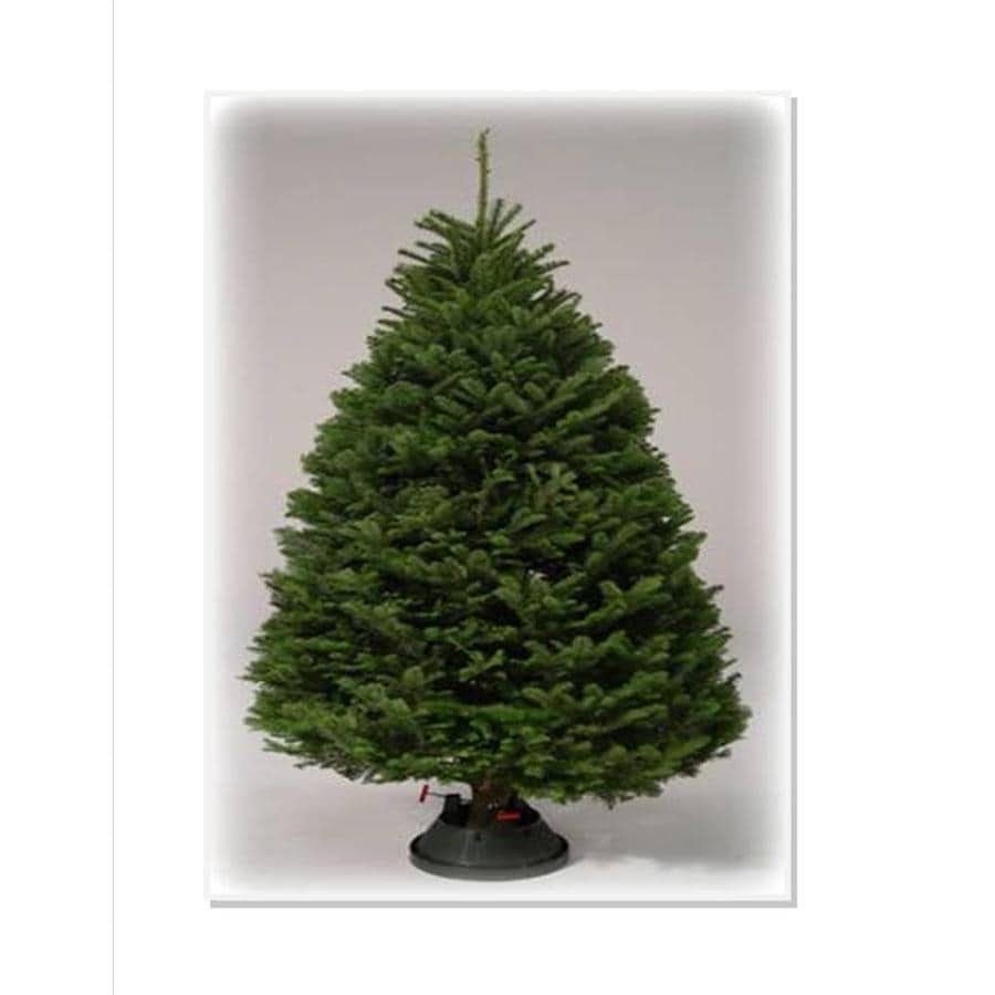 Shop 9-10 ft Noble Fir Real Christmas Tree at Lowes.com