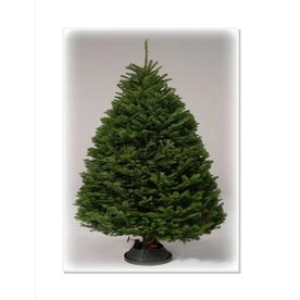 9 10 Ft Fresh Noble Fir Christmas Tree