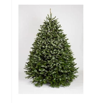Real Christmas Trees Lowes: 6-7 Ft Nordmann Fir Real Christmas Tree At Lowes.com