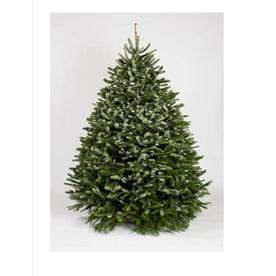 Shop Fresh Christmas Trees at Lowes.com