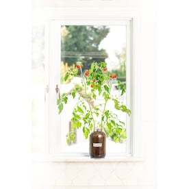 Back to the Roots Fruit Gardening Kit