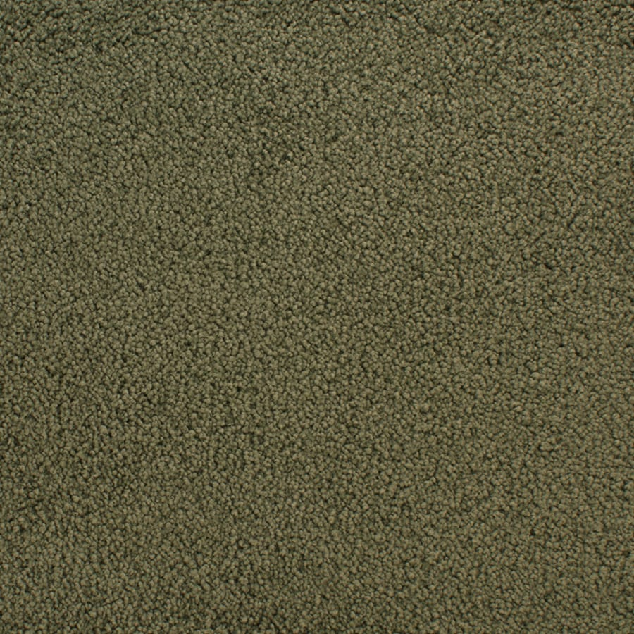 STAINMASTER Active Family Claris Dictate Textured Indoor Carpet