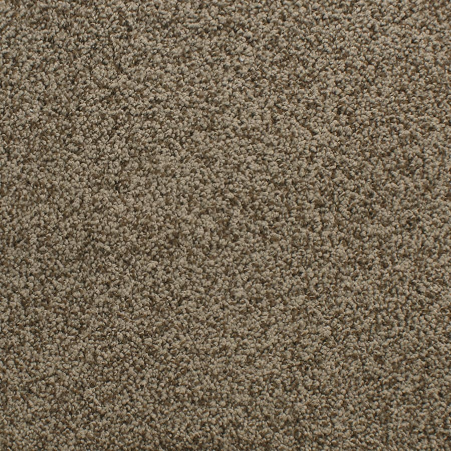 Dixie Group Active Family Exuberance II 116 Brown Textured Indoor Carpet