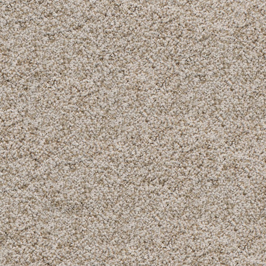 Dixie Group Active Family Exuberance I 112 Brown Textured Indoor Carpet
