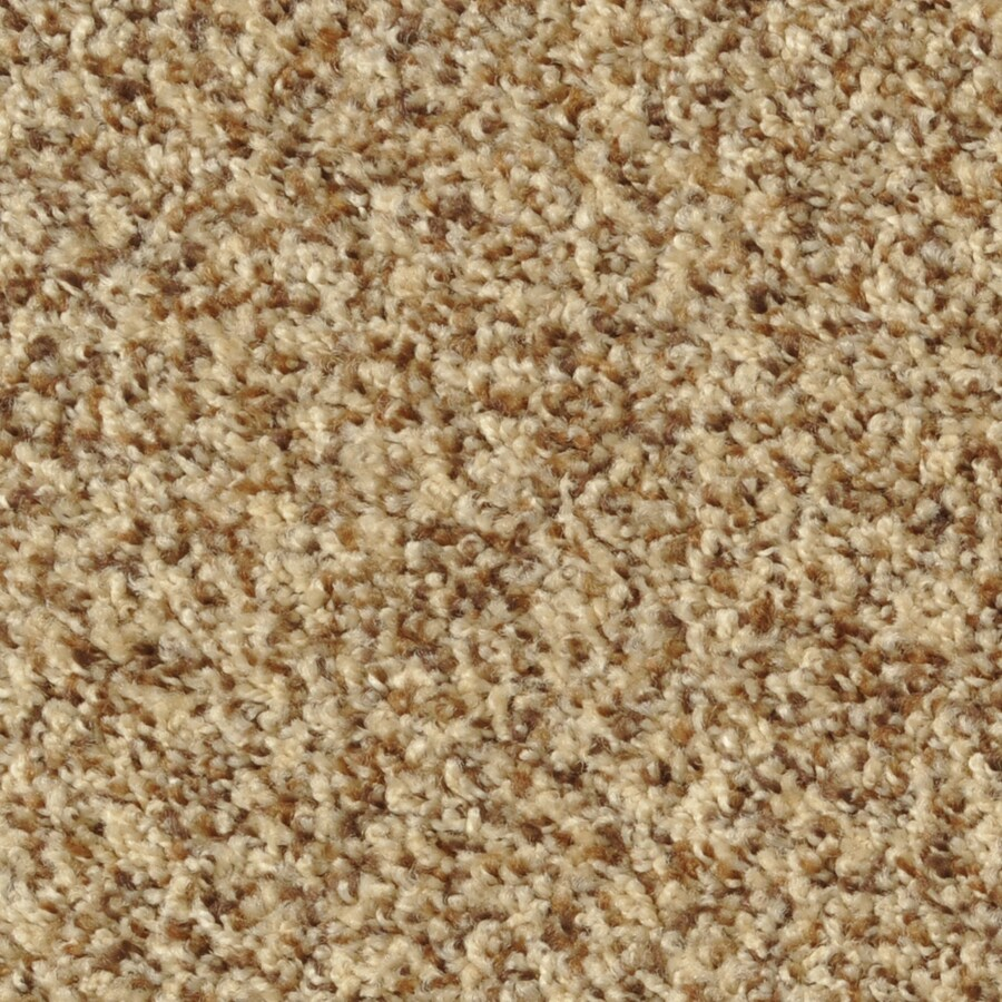 Dixie Group Active Family Maple Springs Pristine Frieze Indoor Carpet