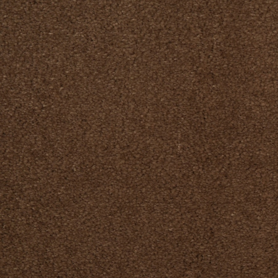 Dixie Group TruSoft Vellore 12-ft W x Cut-to-Length Bramble Textured Interior Carpet