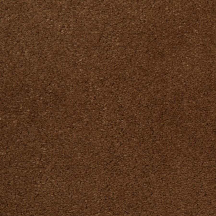 Dixie Group TruSoft Vellore 12-ft W x Cut-to-Length Bellflower Textured Interior Carpet