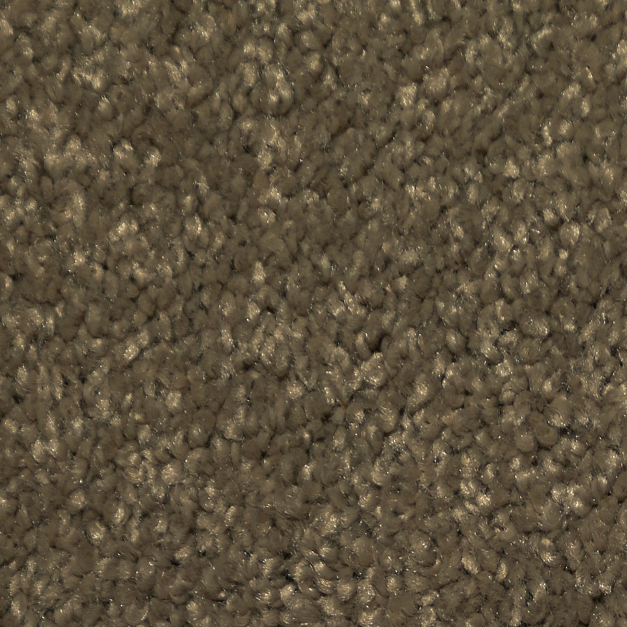 Dixie Group TruSoft Larissa Forbidden Textured Indoor Carpet