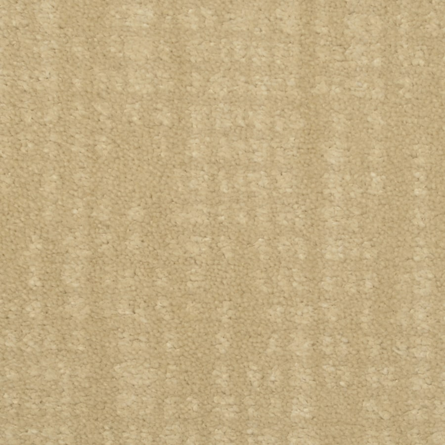 STAINMASTER TruSoft Pine Chapel Competitive Cut and Loop Indoor Carpet