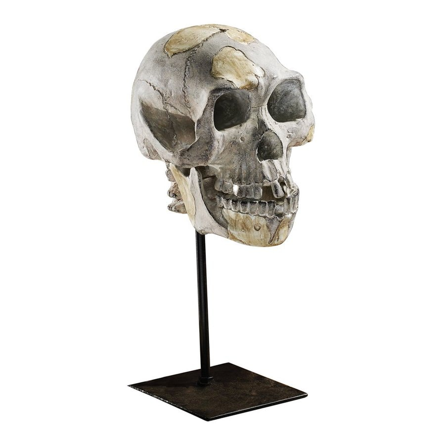 Design Toscano Origin of the Species Designer Resin Lucy (Australopithecus) Skull Sculpture