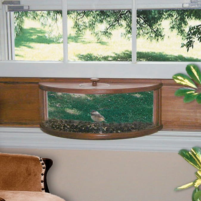 home window bird feeder with the help of sturdy suction cups of coffee and additionally semen bin