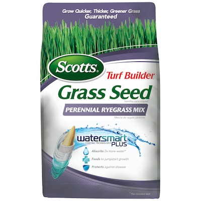 Perennial Ryegrass Lawn Seed Details about  /3 lbs